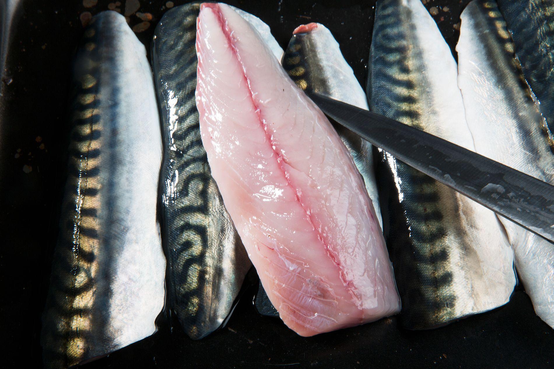 FET FISK: Makrell er blant de fete fiskeslagene. Ifølge VKM kan man spise noe under en kilo i uken uten at det gir negative helseeffekter.