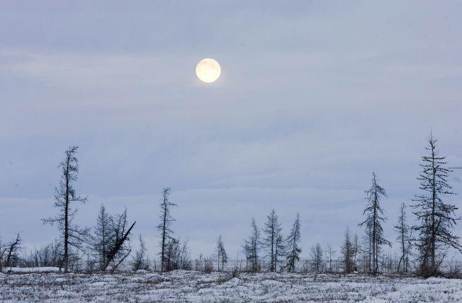 PERMAFROST: 10–15 prosent av jordas landoverflate er tundra. Mye av vegetasjonen i disse områdene holder seg tett til bakken, for å beskytte seg mot kald vind. Her ser du fullmånen over Jamalhalvøya nordvest i Sibir.