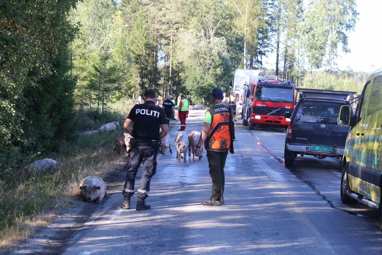 ULYKKE: Politi og viltmemda er på stedet.