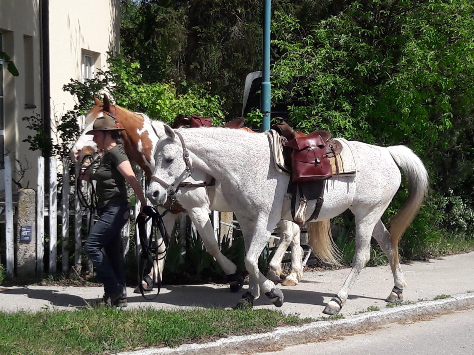 AVREISE: Bildet er fra dagen Greta og hennes to hester la ut på eventyr. Den ene hesten som var ment til å bære bagasje, måtte imidlertid bli igjen etter en trafikkulykke som inntraff etter et par dager. Hesten ble ikke alvorlig skadet i ulykken.