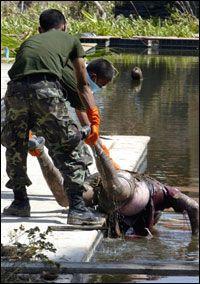 DRUKNET: En død mann blir løftet opp fra vannet i Khao Lak, Thailand. Foto: AFP
