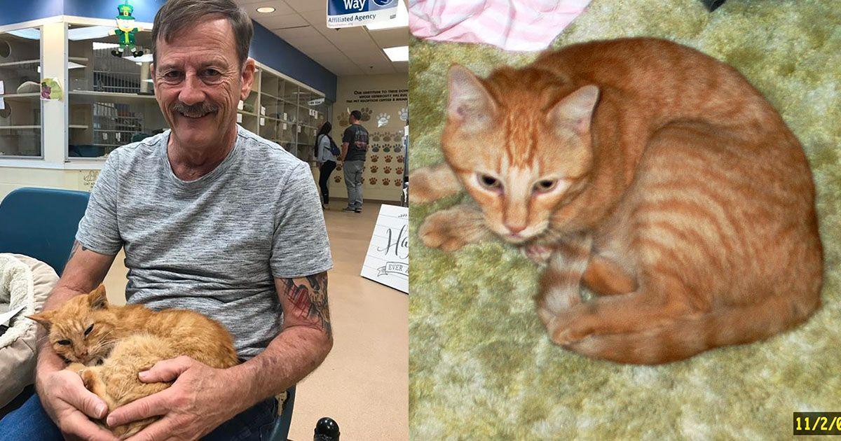 GAMMEL KATT: Katten har overlevd 18 år, og etter 14 år som savnet ble den gjenforent med eieren sin.