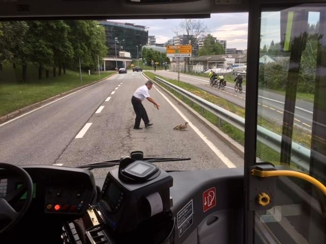 DAGENS HELT: Bussjåføren reagerte resolutt da han oppdaget hva som var i veien...