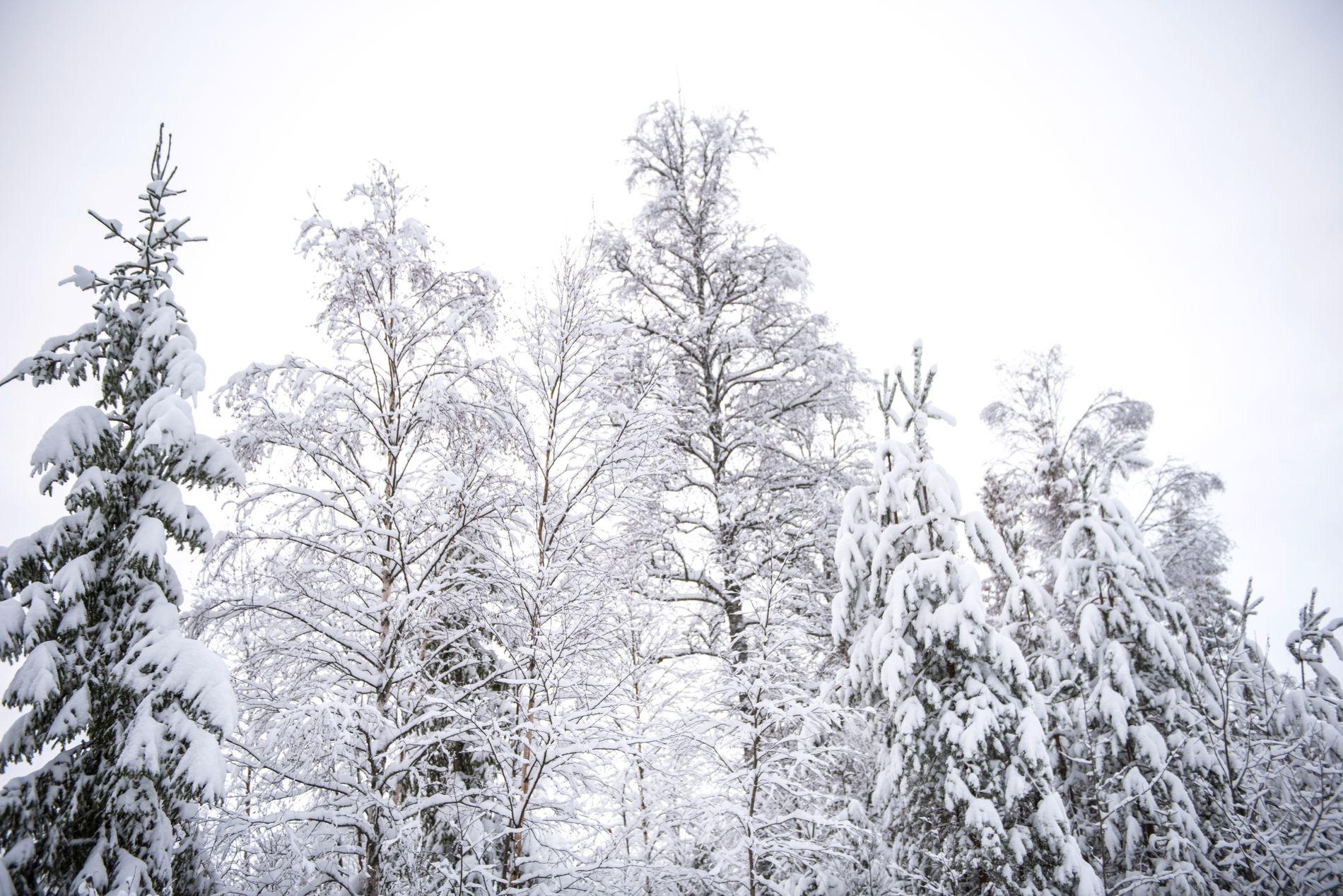 SNØFATTIG: Nå kan det bli påfyll av snø og mer vinter i Norge. Her fra Nes i Akershus, fotografert i desember i fjor.