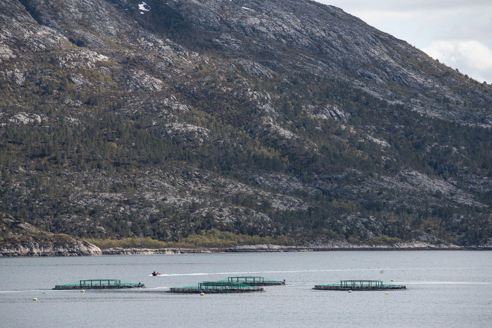 HÅP FOR SMOLTEN: Her svømmer 350 000 smolt, og 50 000 har bukket under for alger. Dør resten, har ikke Mortenlaks voksen laks å selge før 2021.