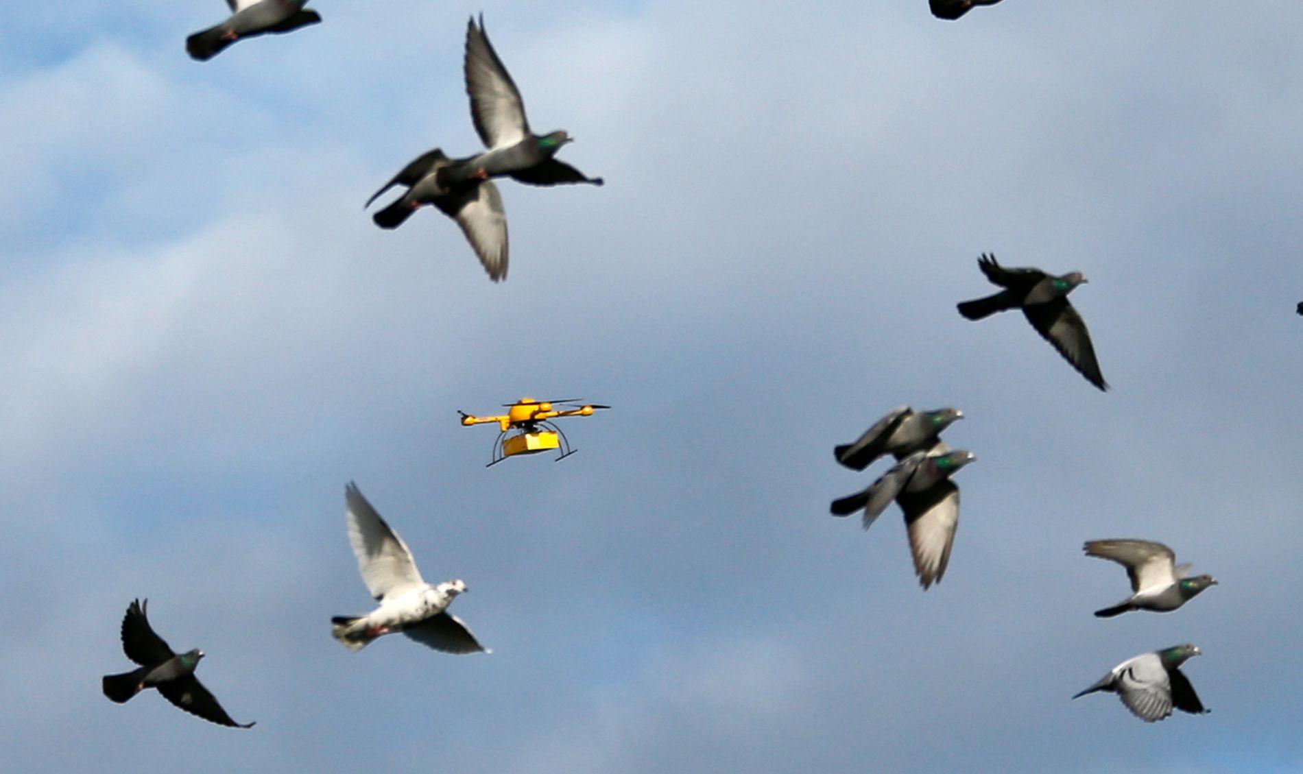 LUFTANGREP: Droner mot brevduer er blant de humoristiske forslagene til ny grensekontroll mot smugling. Dette bildet er fra tyske DHL som i 2013 demonstrerte sin pakkedrone. Duene ble ikke skadet.