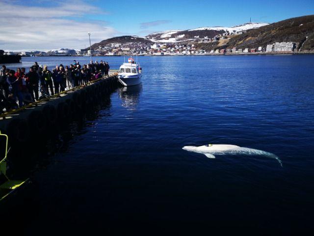 FOLKEMENGDE: Det var mange skuelystne på kaia i Hammerfest i dag.