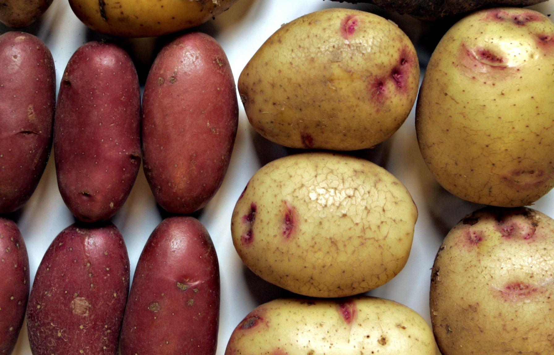 POTETER: I år kommer nok potetene i mange forskjellige fasonger. For ordens skyld: bildet viser forskjellige typer.