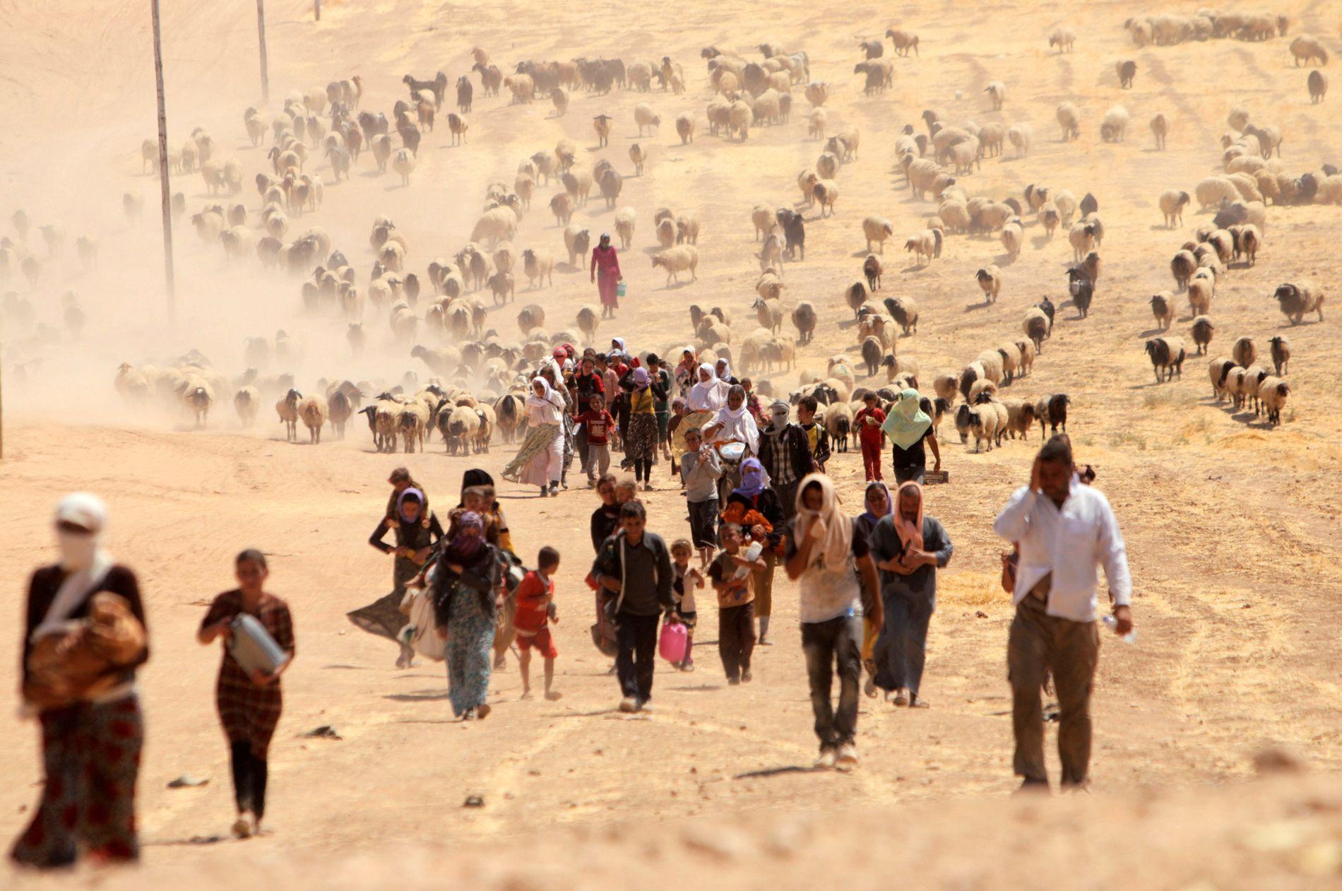 PÅ FLUKT: De som overlevde folkemordet på jesidiene i 2014 forsøkte å flykte opp på Sinjar-fjellet nord i Irak.