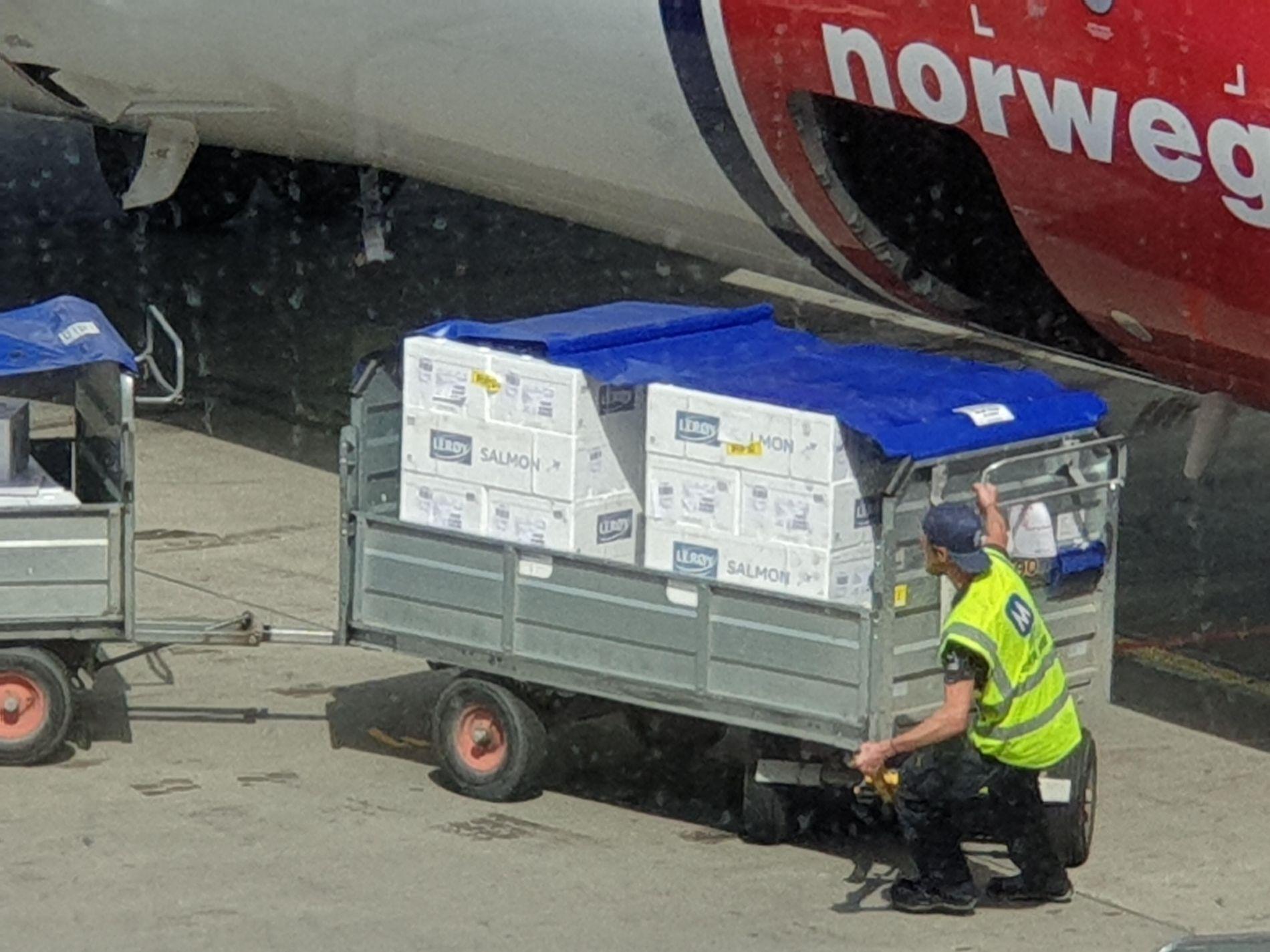 GLAD LAKS: Passasjer Gaute Næss har tatt bildet som dokumenterer at Norwegian prioriterte fersk laks fremfor bagasjen til feriestemte sydenfarere.