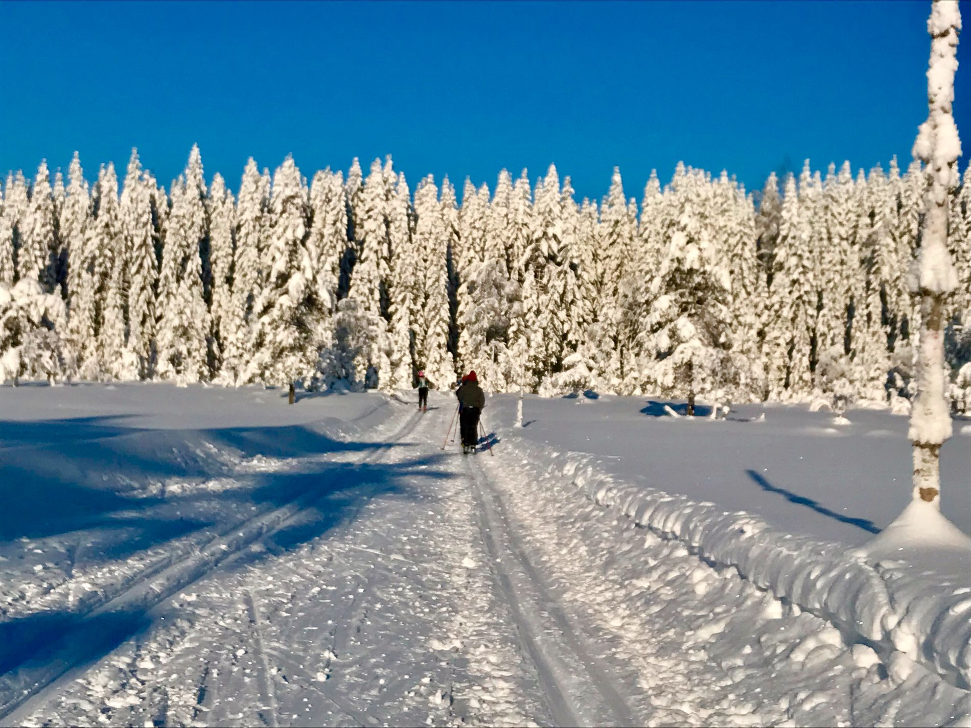 PÅ MED SKIENE: Det blir påfyll av snø i store deler av landet, og skulle det friste med en skitur, melder meteorologene om en «vinterlig helg i vente».