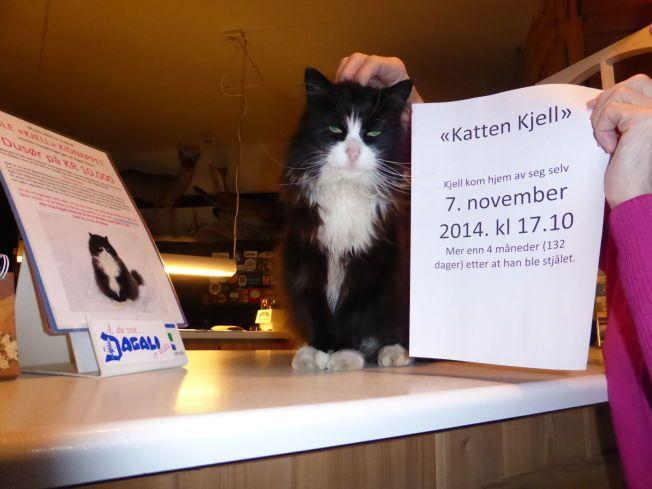SLITEN: Katten Kjell (16) var ikke i storform da han endelig kom hjem, etter 132 dager. Her på resepsjonsskranken hjemme på Dagali hotell.