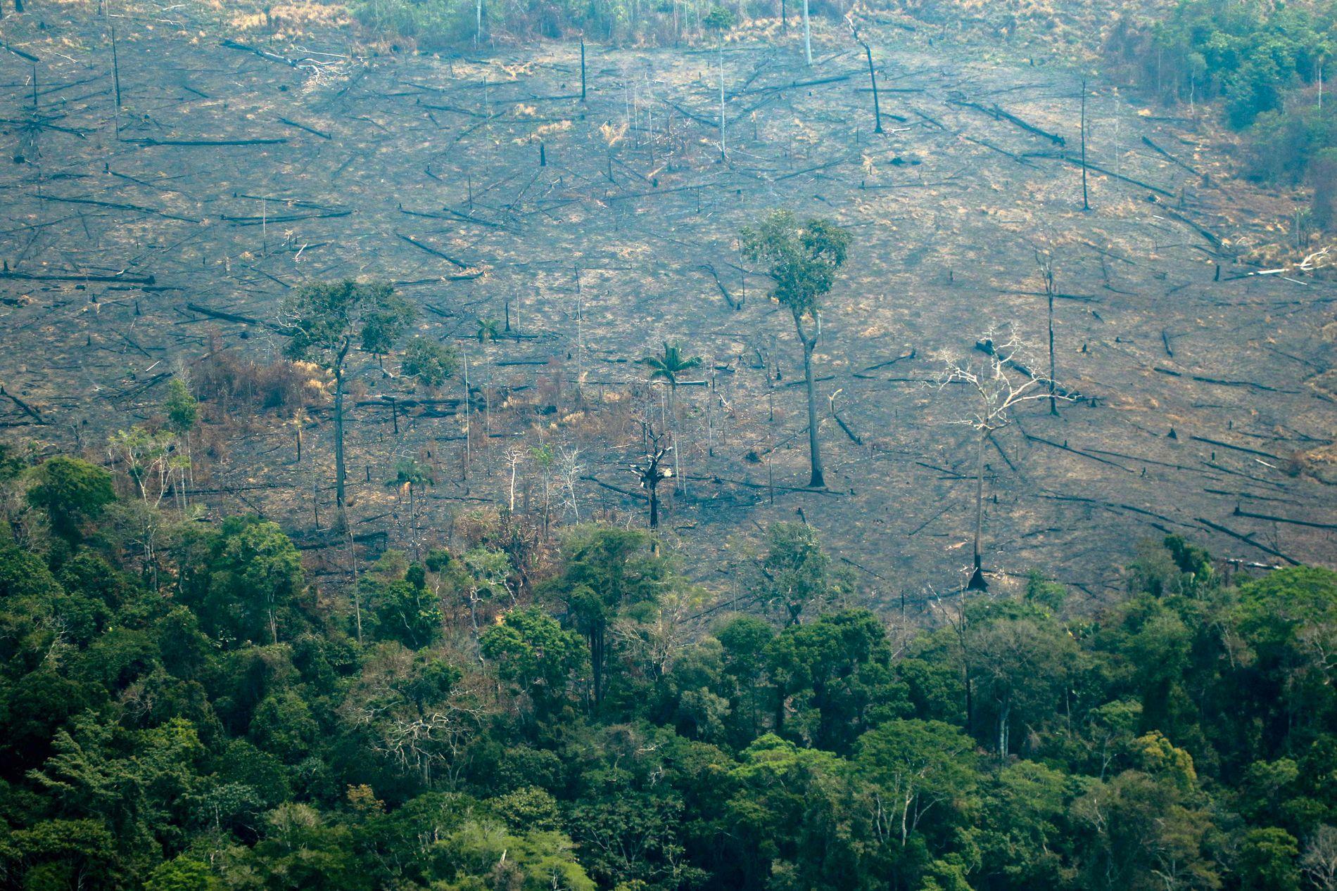 BRENT: Omtrent 0,4 prosent av hele Amazonas areal har brent ned så langt i år. Dette bildet er tatt i Boca do Acre.