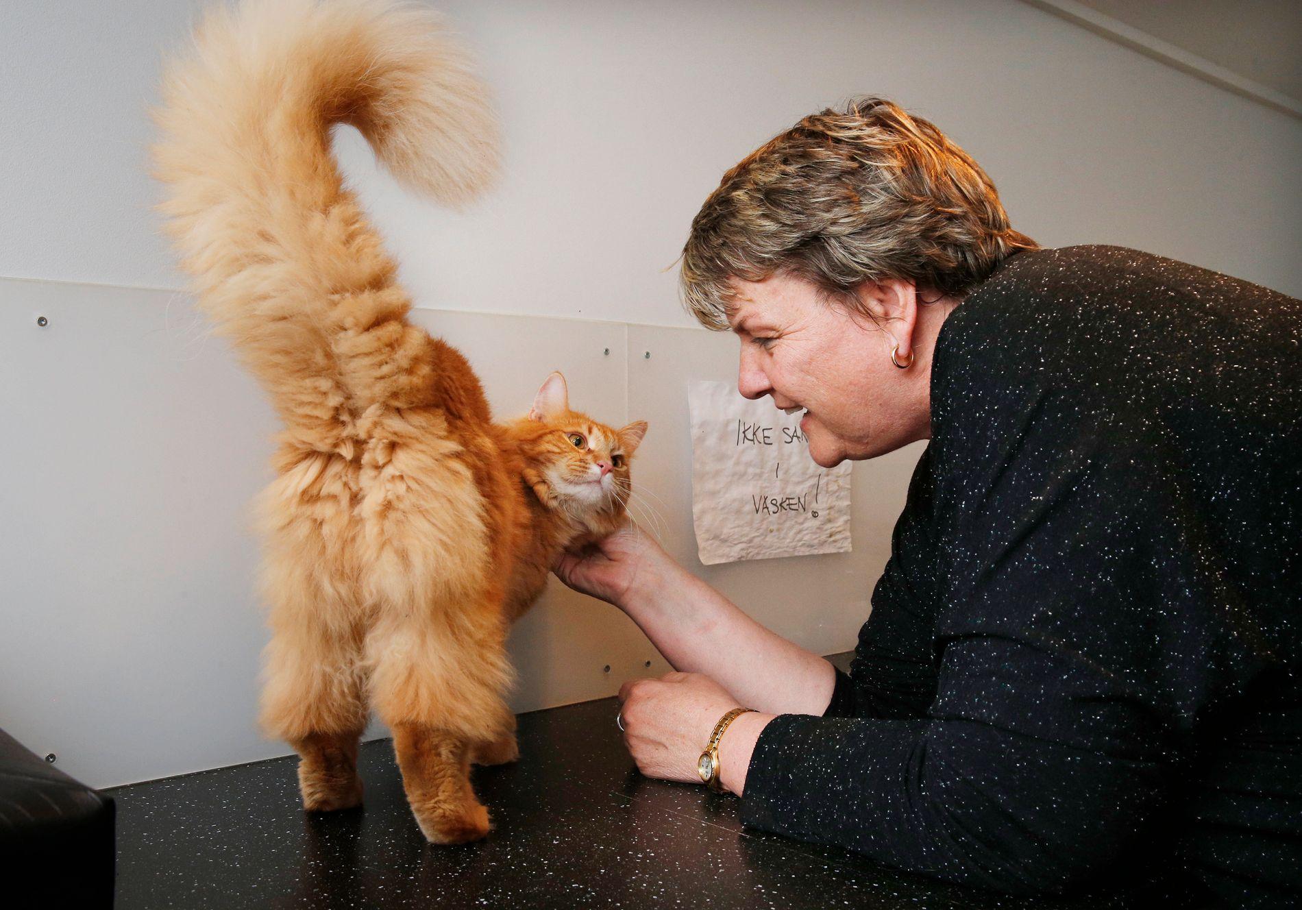 SORG OG GLEDE: Stine Jansen, her med Simba, sier at det er et tveegget sverd å jobbe med hjemløse dyr. Etter ti år kan hun fremdeles gråte over grusomme dyreskjebner, men også bli lykkelig av å se en katts utvikling fra livredd til lykkelig.