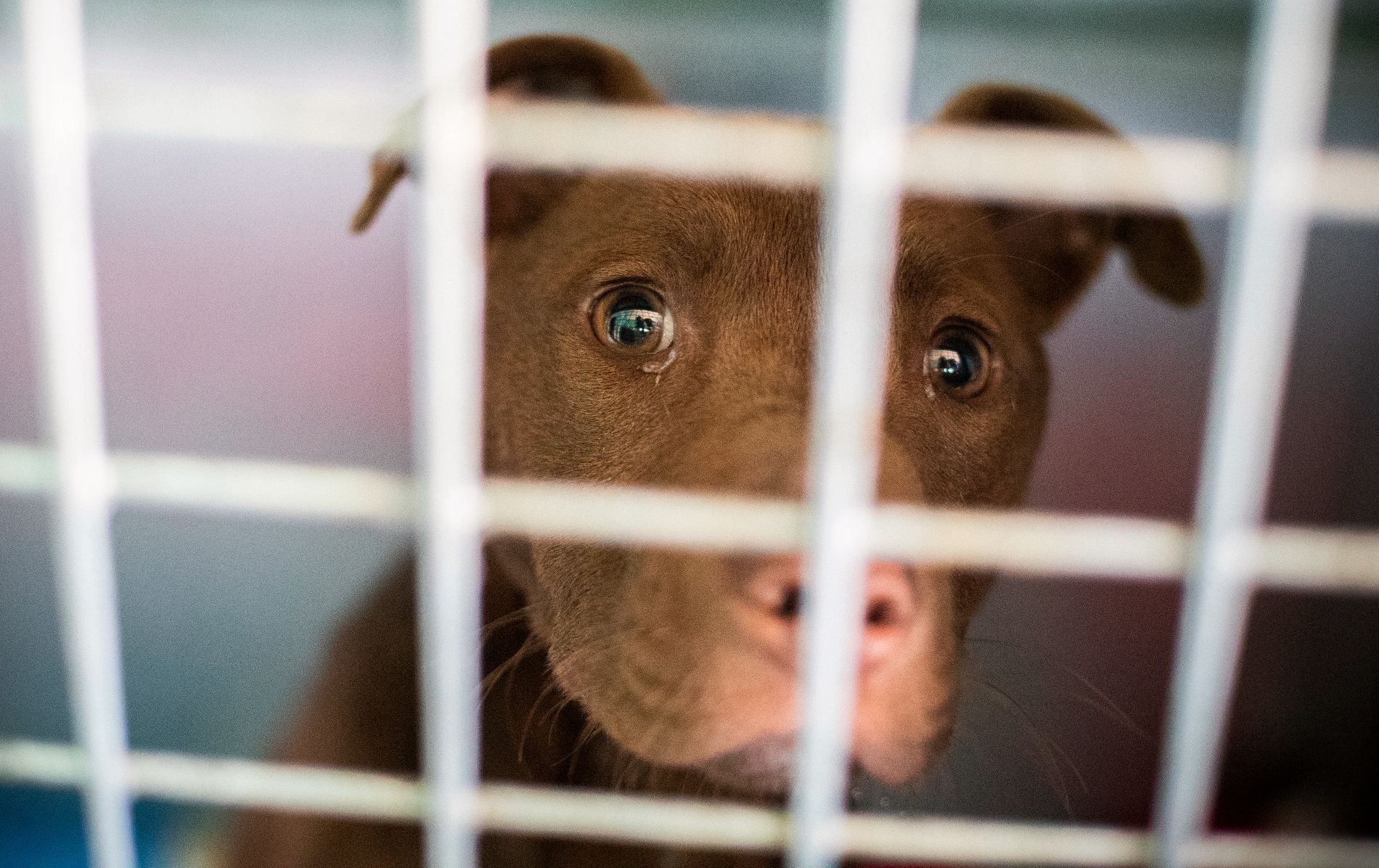 DIARÉ: De hundene man antar at har blir smittet av sykdommen, har hatt symptomer som blodig diaré. Illustrasjonsfoto.