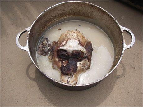 KOKES: Viltvoktere fant dette kokte sjimpansehodet i en gryte i Den sentralafrikanske republikk. Foto: David Greer, WWF