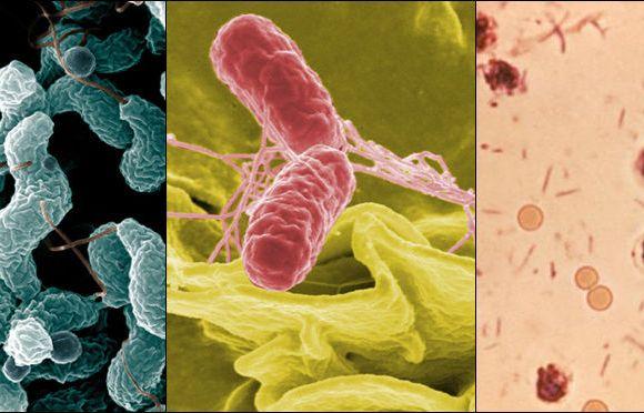 Disse smittsomme sykdommene får nordmenn i utlandet