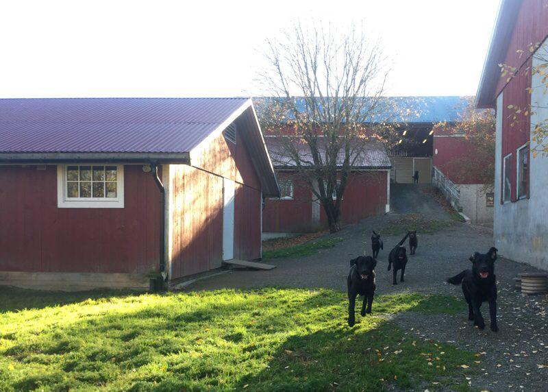 OMSTRIDT: Løken gård er den eneste gården i Norge med tillatelse til å drive oppdrett av hunder og katter til dyreforsøk.