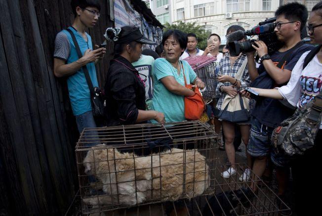 DYREVENN: Dette bildet, tatt 20. juni, viser Yang Xiaoyun mens hun går rundt på markedet i Yulin og kjøper 100 hunder.