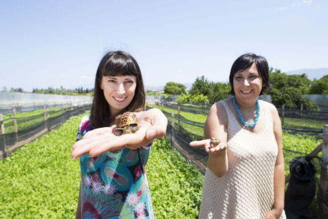 TÅLMODIGE: Maria (t.h.) og Penny Vlachou sier de som snegleoppdrettere har stor tålmodighet. Men Hellas' finanskrise og den siste ukens politiske debatt gjør at selv de begynner å tære på siste rest av positivitet.