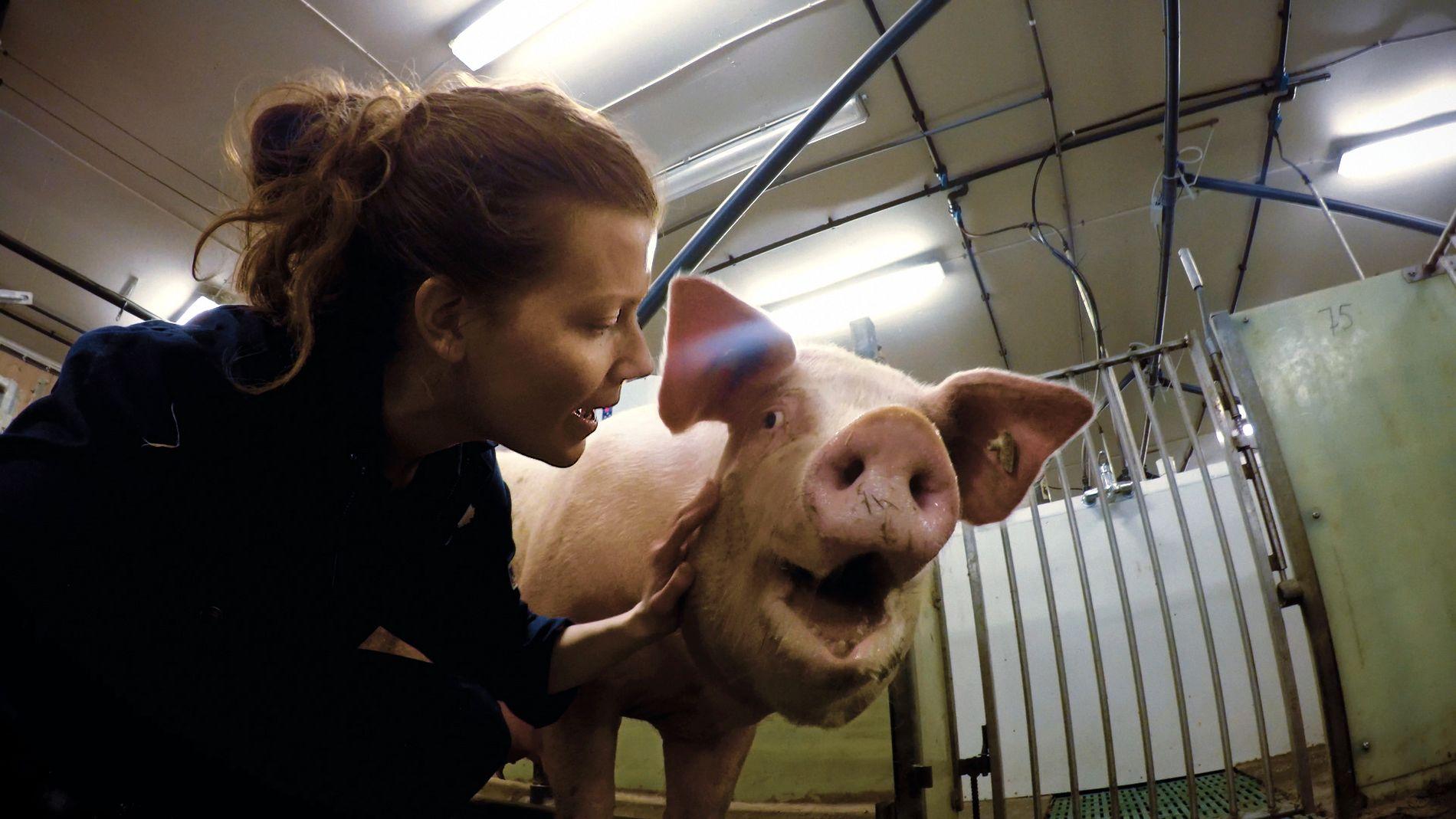GIKK UNDERCOVER: Norun Haugen reiste rundt med ulike identiteter i fem år for å avdekke brudd på dyrevelferd hos norske grisefarmer.