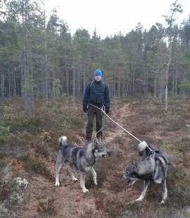 STØRRE ENN ELGHUNDENE: Bård Bjerkeland på tur med sine to største hunder.