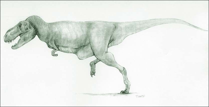 ELEGANT: Slik skal dinosauren Tarbosaurus ha sett ut da den levde for millioner av år siden. Foto: AP