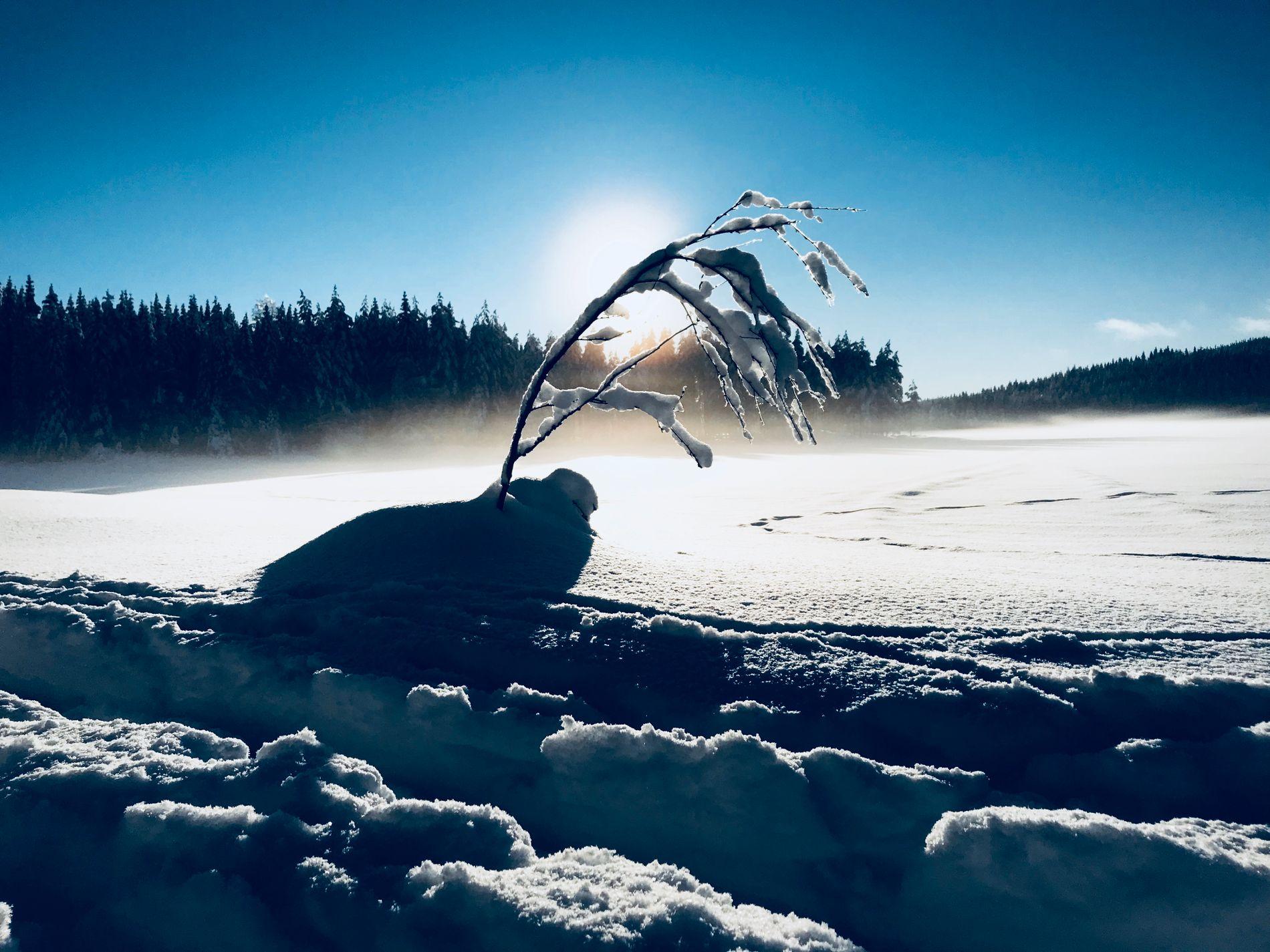 SPRENGKULDE: Værfenomenet stratospheric warming (SSW) kan gi en iskald avslutning på måneden.
