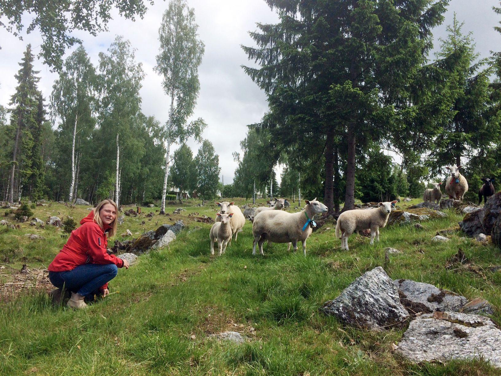 HOLDES INNE: Spesialkonsulent for jordbruk ved landbrukskontoret for Hadeland, Kjersti Andresen, sammen med noen av sauene i kommunene som skulle vært på utmarksbeitet.