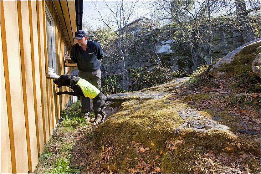 «MAURSLUKER»: Tor Iljar og Demi på jobb i en hytte hvor feite stokkmaur har gjort stor ugang.