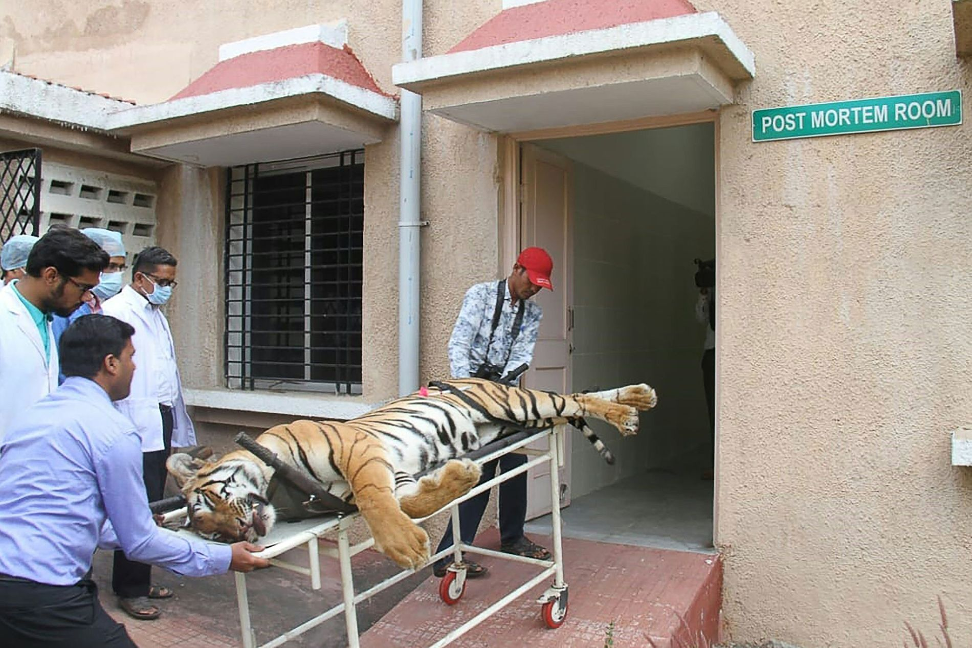 DREPT: Mens landsbybeboerne jublet over dødsfallet, skal dyreaktivister ha kalt skytingen for ulovlig og uetisk.