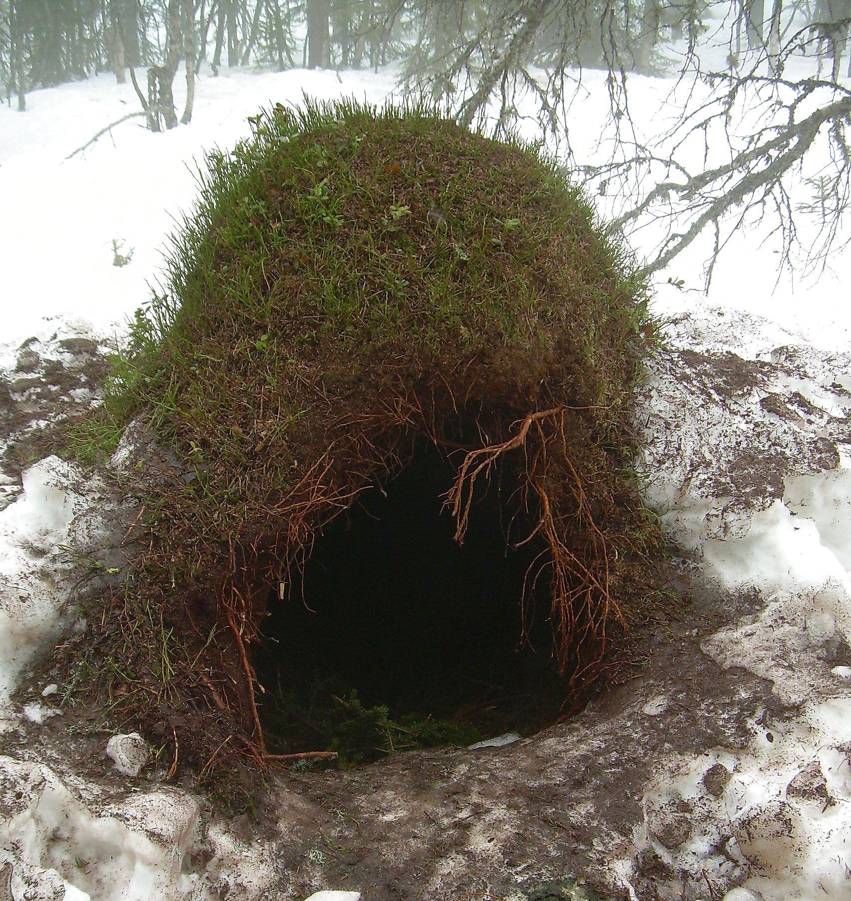 Bjørnehiet ved Osensjøen der binna og to unger har sovet seg gjennom vinteren.