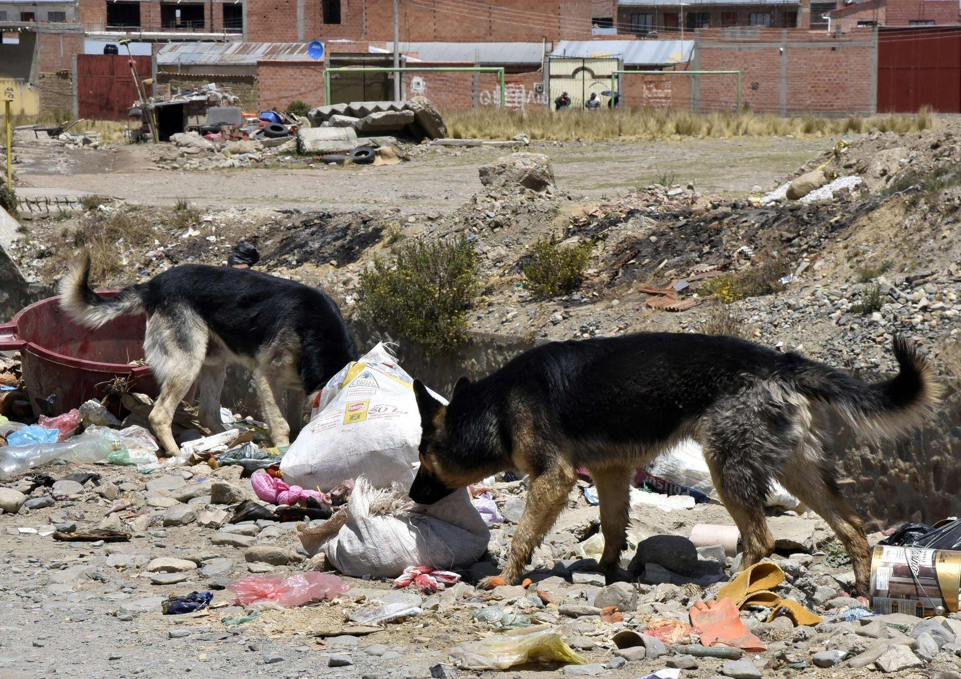 LØSHUNDER: To schaferhunder i La Paz i Bolivia, et land hvor rabies iblant dukker opp.