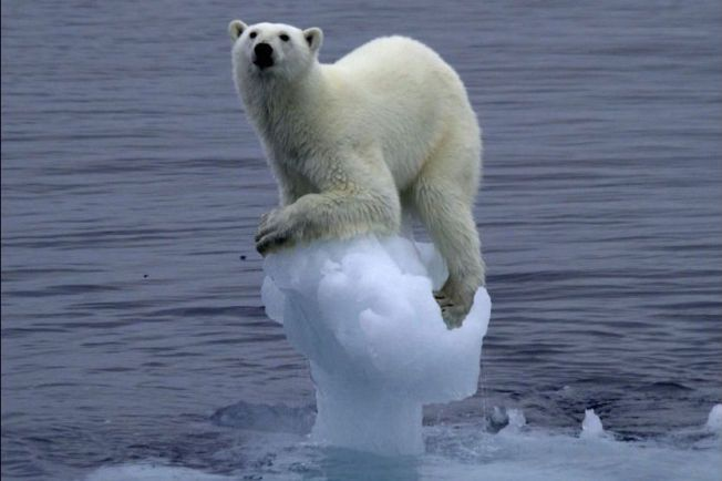 GLOBAL OPPVARMING: Fortsetter den globale oppvarmingen som i dag, tror mange forskere at konsekvensene kan bli katastrofale. Denne isbjørnen klamrer seg fast til det som er igjen av et lite isfjell. Foto: Scanpix
