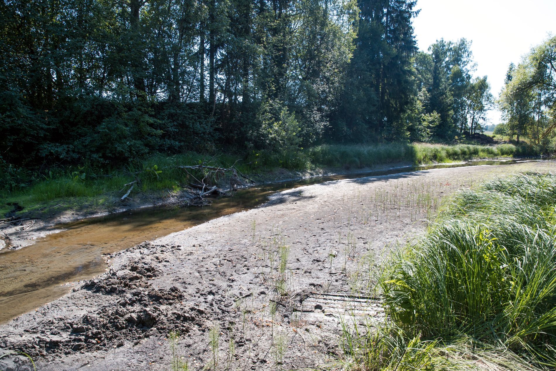 Mange elver tørker inn som følge av varmen. Her et bilde av Loeselva mellom Hokksund og Steinberg i Buskerud tatt tidligere i sommer.
