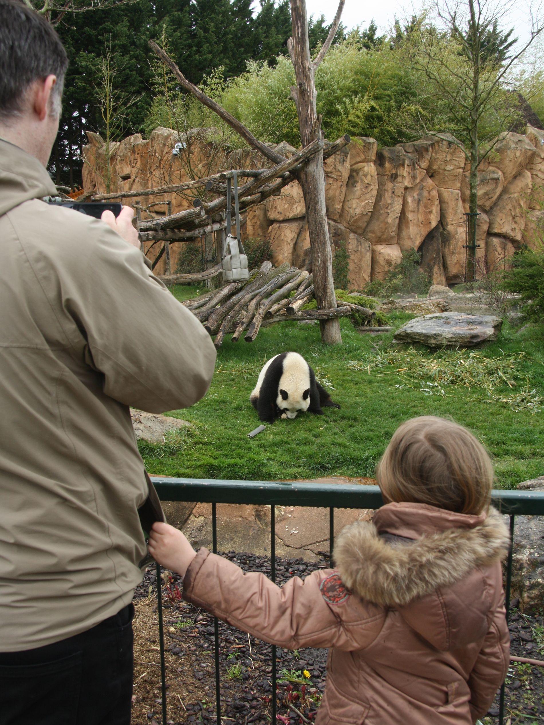 POPULÆRE PANDAER: Ett av de fem pandaparene som finnes i Europa bor i Beauval-parken i Frankrike. Det sørger for gode besøkstall.