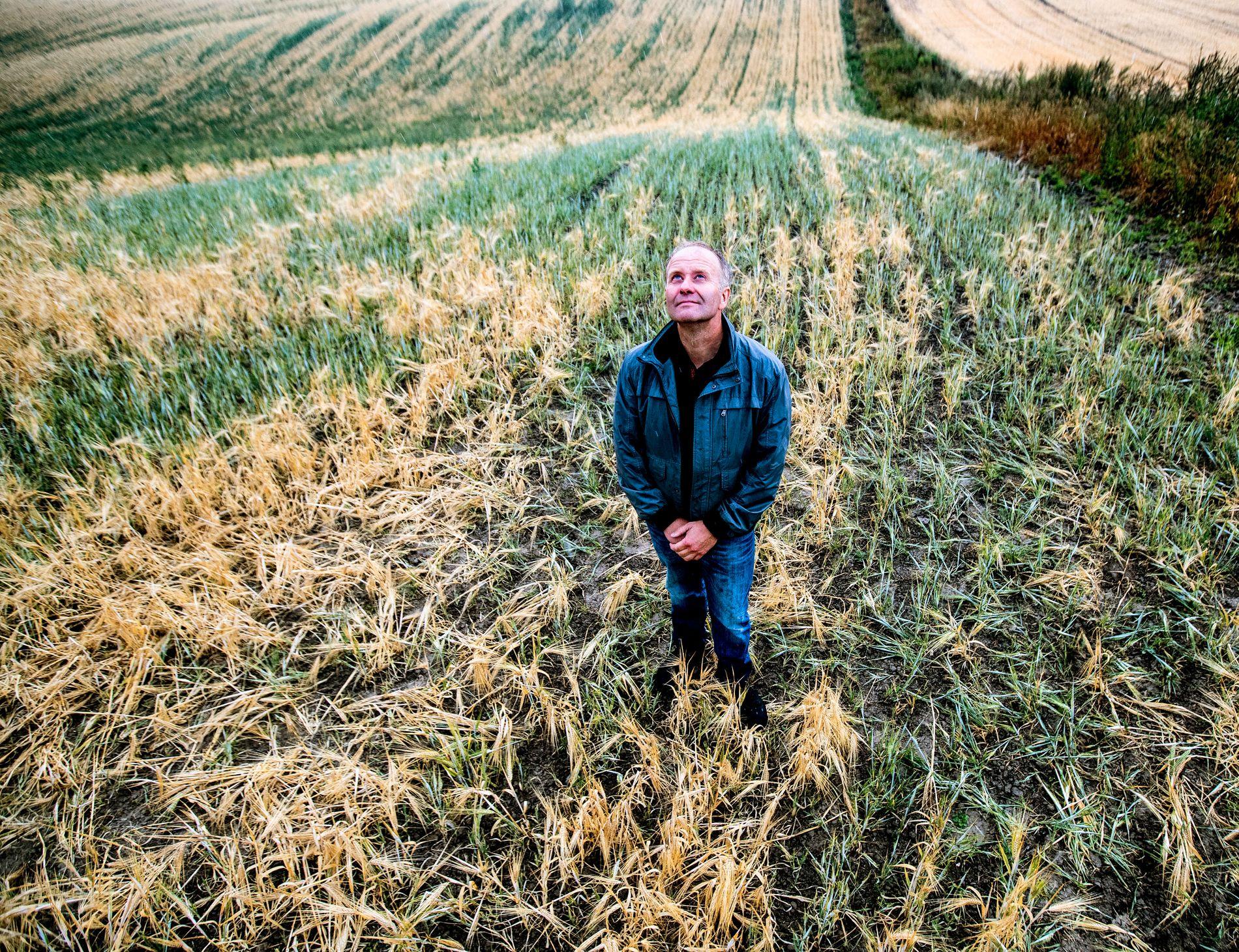 ENDELIG: Kløfta-bonden Lars Egil Lauten har jobbet på spreng i hele sommer for å få nok fôr til kyrne sine. Det har så vidt gått. Her gleder han seg over at det endelig kom litt regn.