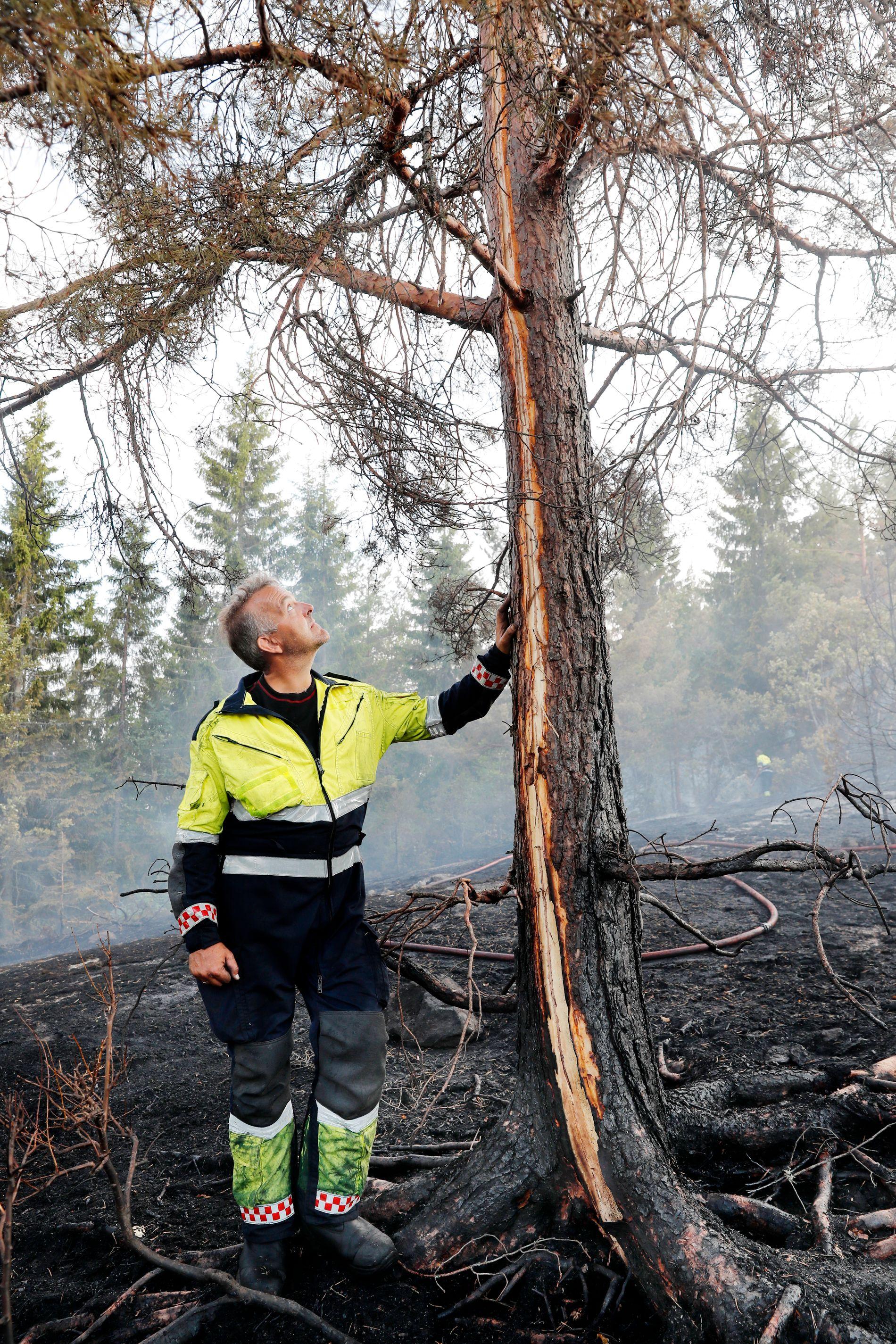 AUST-AGDER: Et tre står på toppen av brannområdet ved Vegårshei. sporet i treet vitner om at brannen ble startet av et lynnedslag, som gikk gjennom treet og boret seg ned i den tørre bakken. Trond Saga har lørdag kveld kjempet for å få kontroll på brannen.