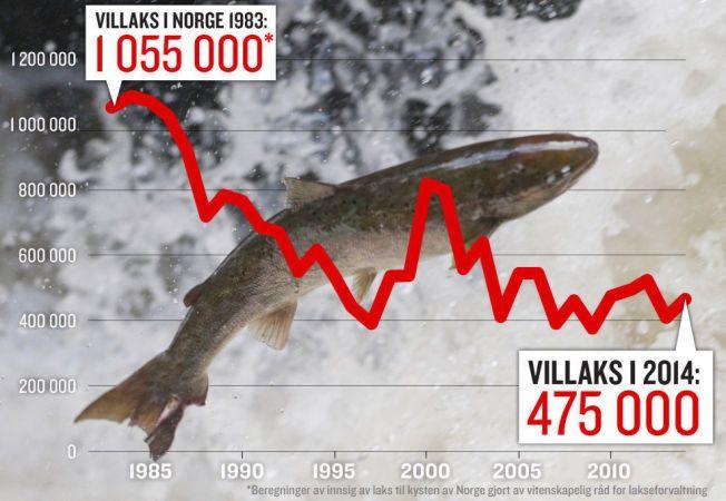NEGATIV UTVIKLING: Innsiget av laks er redusert med 55 prosent fra de første fire til de siste fire årene i perioden fra 1983 til 2014. Størrelse på lakseinnsiget er gitt som antall voksne laks som kommer fra havet til elvene for å gyte, før beskatning i sjø- og elvefisket. Til tross for en liten oppgang det siste året opplyser Vitenskapelig råd for lakseforvaltning at trenden totalt sett fremdeles er nedadgående.