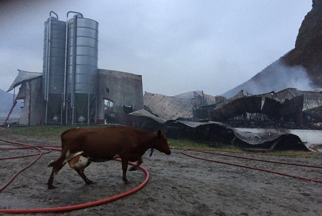 MISTET MANGE KYR: Bonde Inge Lynum anslår til VG at han har mistet minst 80 dyr i nattens tragiske brann.