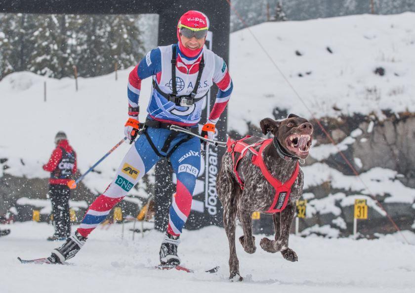 X-FAKTOREN: Ole Einar Bjørndalen har prøvd seg noen ganger før med hundekjøring. Her er han i spann med hunden «X».