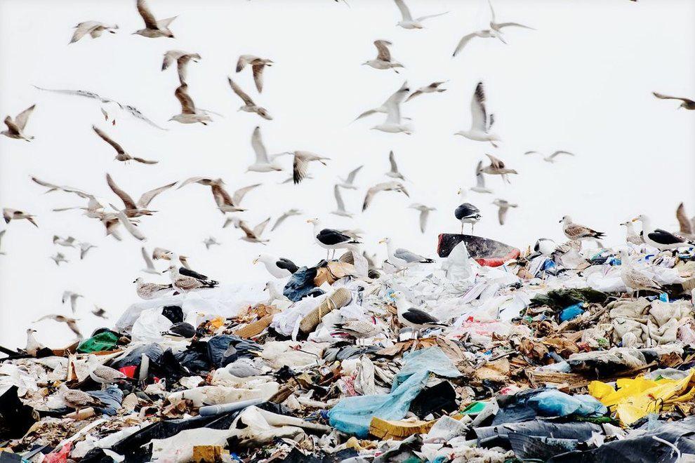 PLASTHAV: Når denne plasten brytes ned, kan den ende i havet, spises av fisk og skjell, og til slutt havne på middagsbordet ditt.