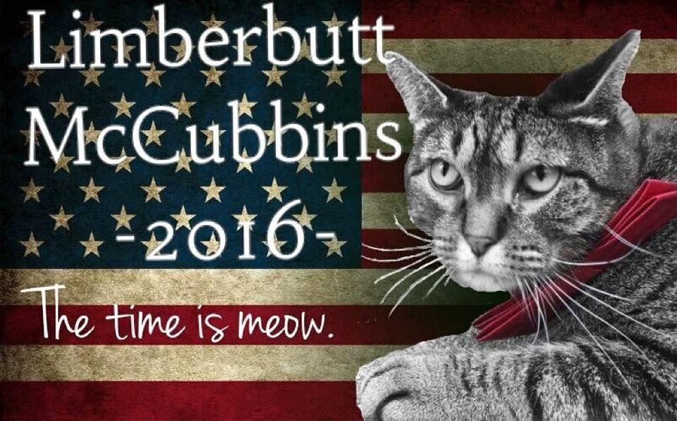PUSETE PRESIDENT: Limberbutt McCubbins er en ekte presidentkandidat, eller kattidat, eller kandikatt. Hans hovedmål er ikke å bli verdens mektigste katt, men å oppmuntre og inspirere folk til å engasjere seg i politikk og ikke minst til å stemme (bare ikke på Trump). Foto: LIMBERBUTT2016/FACEBOOK