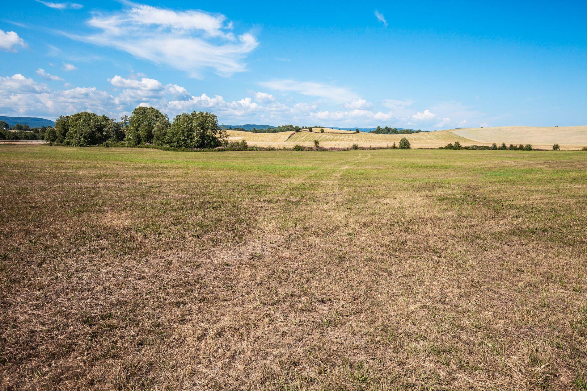 TØRKE: Et jorde i Akershus fotografert 22. juli.