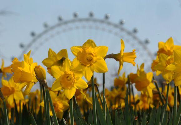Derfor drar rekordmange til London 17. mai