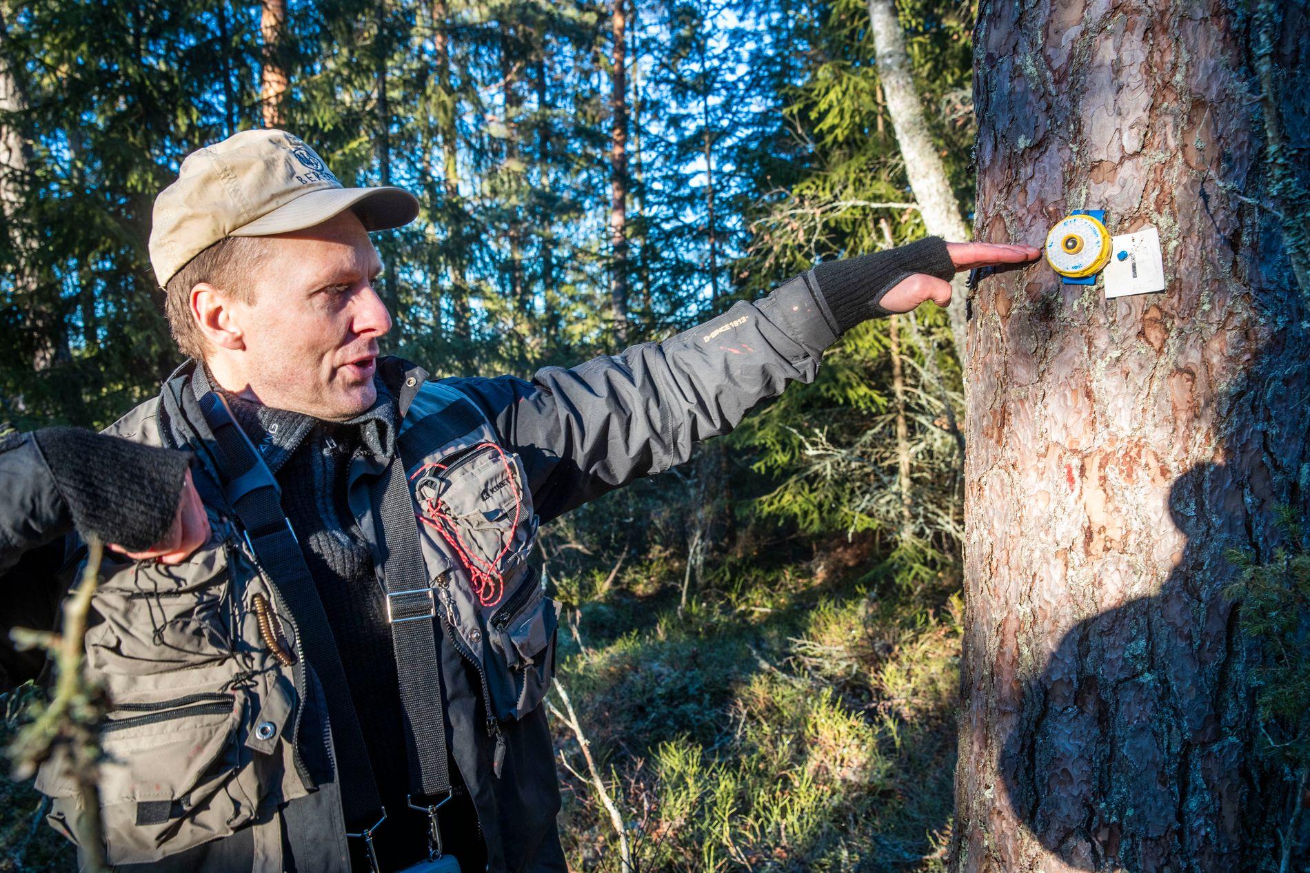 ALT MÅLES: Knut Ole Viken bruker en ultralydsender til å måle høyden på trærne. 25 personer bruker fem år på å taksere all skog i Norge.