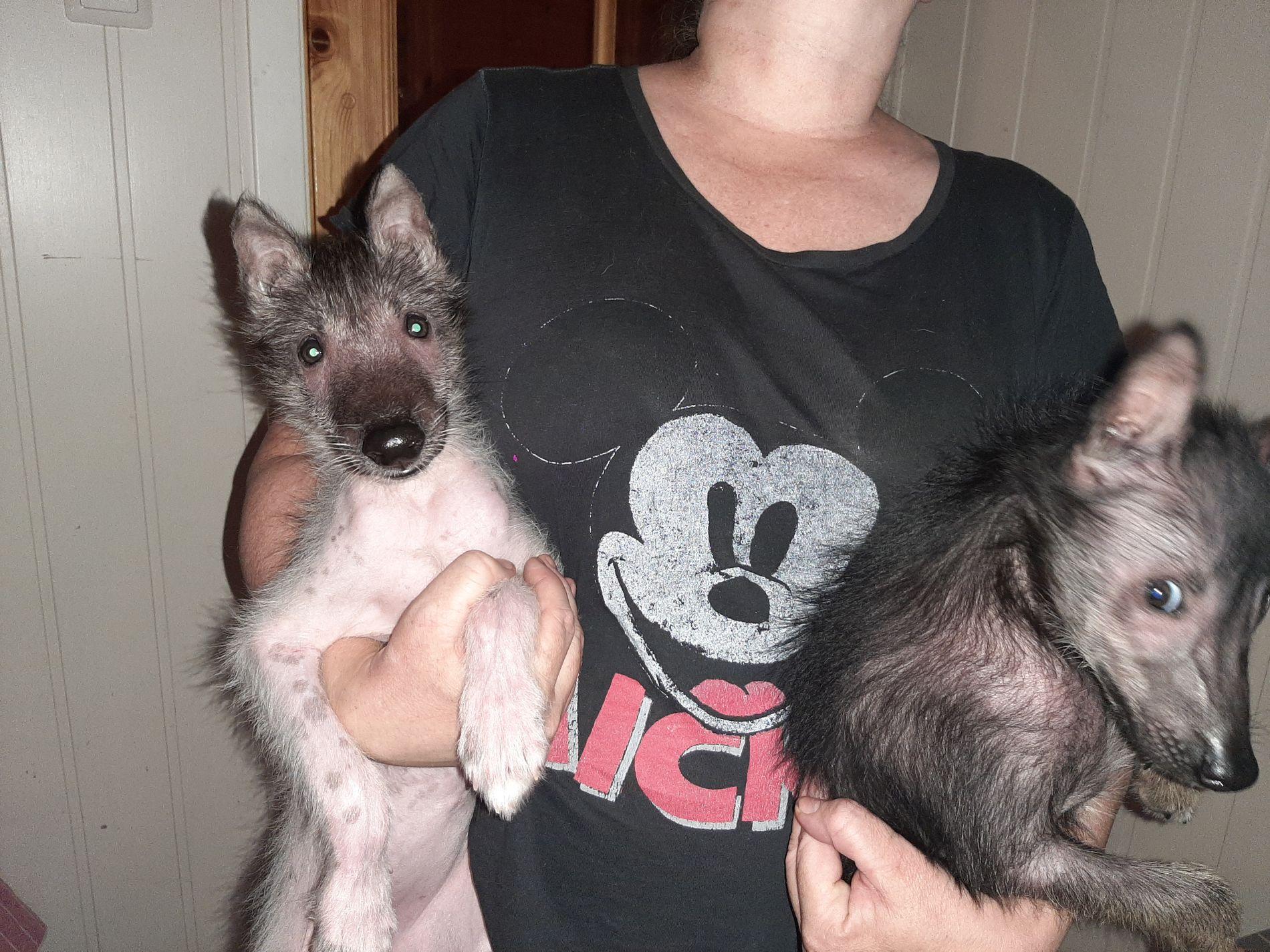 VALPER: Her er hundene i armene til matmor.