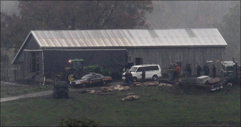 DYRETRAGEDIE: Her ligger flere av de mange dyrene som er skutt i Ohio, etter at de slapp løs fra en dyrehage. Foto: AP