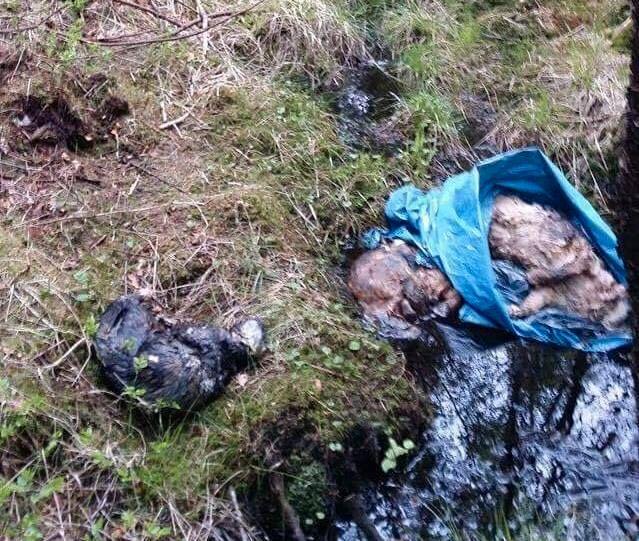 GROTESK: – Dette er helt forkastelig, sier Siv Askeland i dyrevernsorganisasjonen Lucas om funnet av tre dumpede katter utenfor Stavanger.
