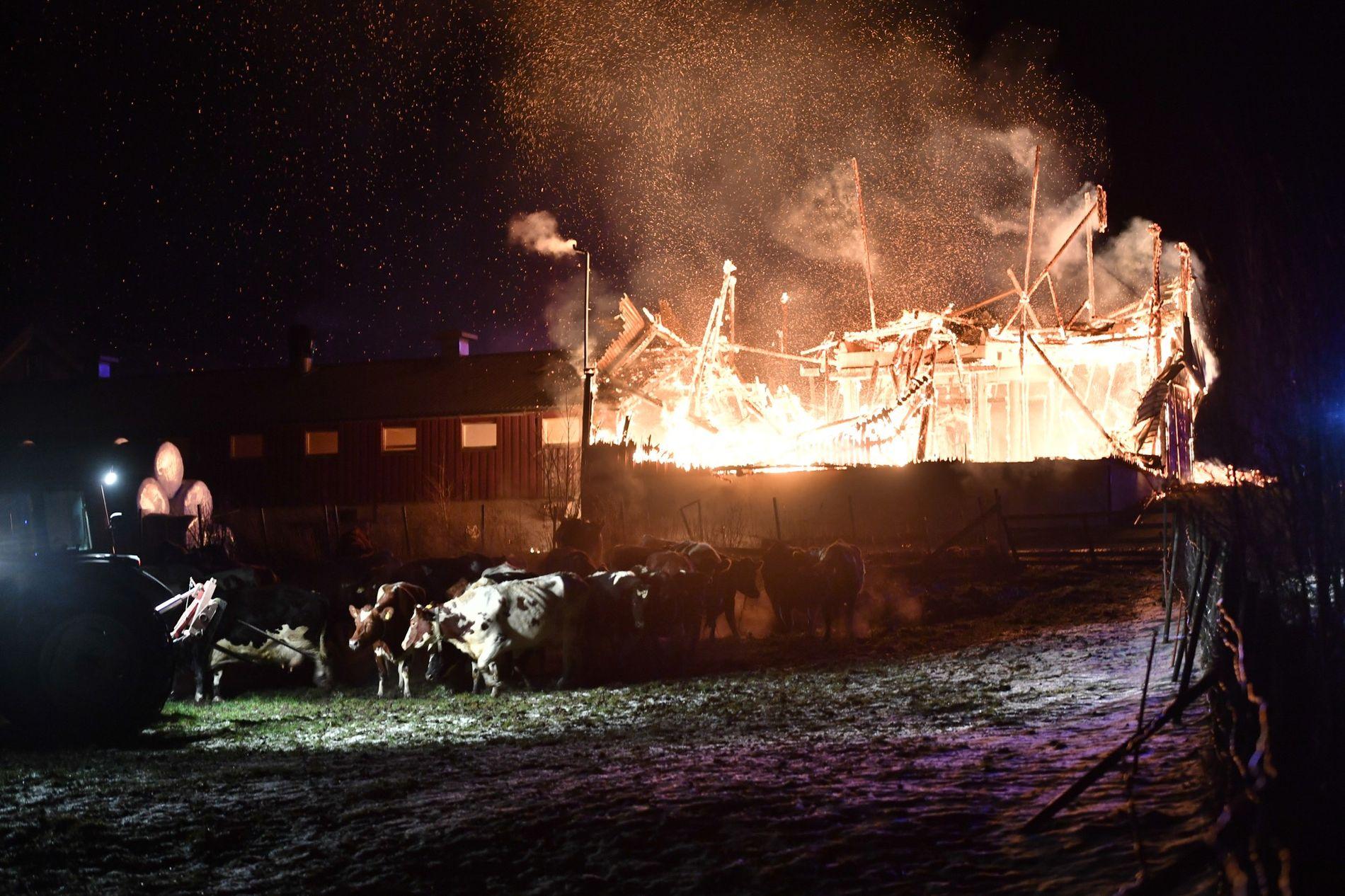 OVERVENT: Politiet tror at fjøset vil brenne helt ned.